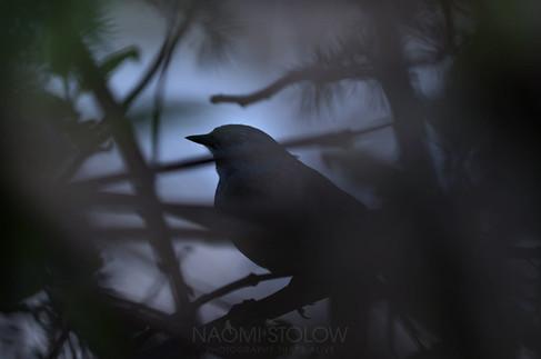 EW9A4798_bird_web.jpg