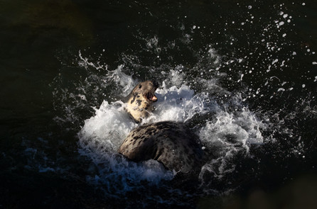 Seal squabble