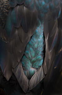 Jewel of feathers