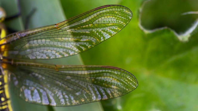 A47I8603_dragonfly.jpg