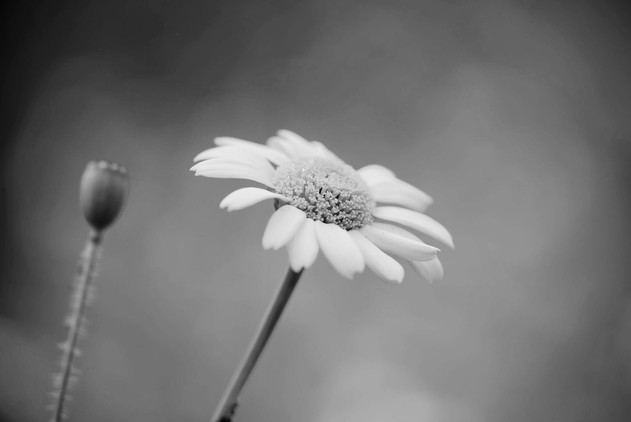 A47I8273_flower_web.jpg