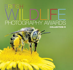 BWPA British Wildlife Photography Awards Collection 6 Book