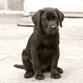 Future Guide Dog