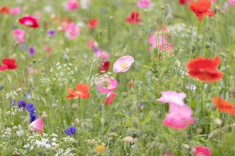 CY6A0242_wildflowers_web.jpg