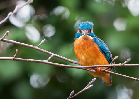 A47I5860_kingfisher_web.jpg