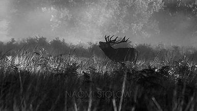 1K4A4459_stag_naomi_stolow_gs_fb.jpg