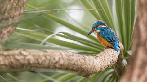 A47I5916_kingfisher_web.jpg