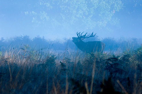 Stag in blue light greeting card