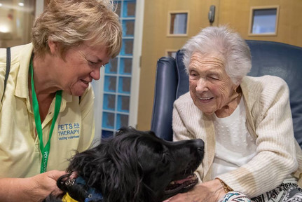 Pets as Therapy dog at work