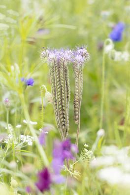CY6A0355_wildflowers_web.jpg