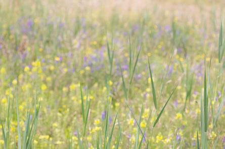 CY6A0187_wildflower_meadow_web.jpg