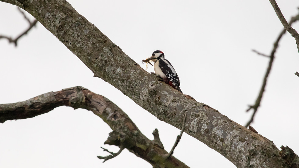 A47I8977_woodpecker_dragonfly.jpg