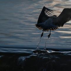 IMGL5229-gull_spiral_water.jpg
