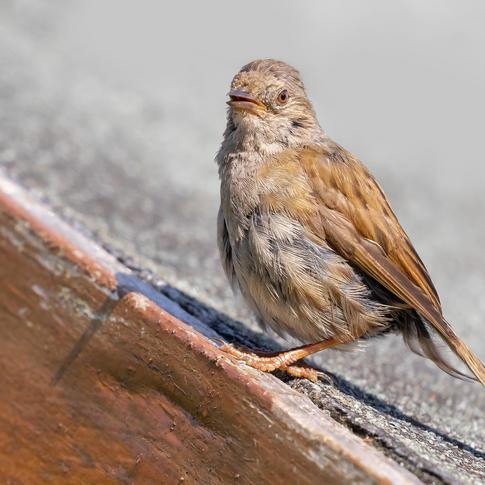 CY6A0156_bird_web.jpg