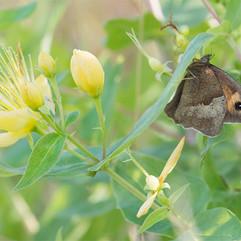 botanical-meadow_brown.jpg