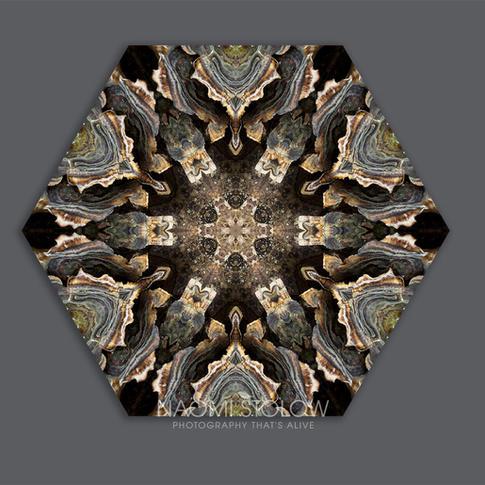 Coriolus versicolor fungus
