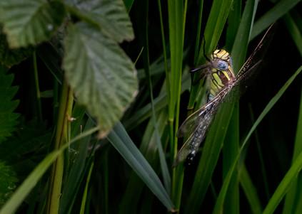 A47I8338_dragonfly.jpg