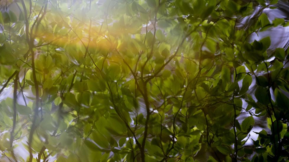 A47I2871_leaves.jpg