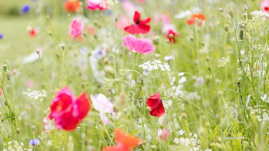 CY6A0352_wildflowers_web.jpg