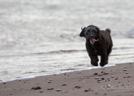 The amazing hover-dog: a walk on the beach