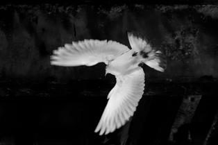 A47I7994_pigeon_pier_web.jpg