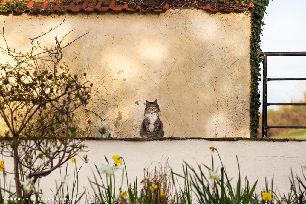 Simba in his Mondrian garden