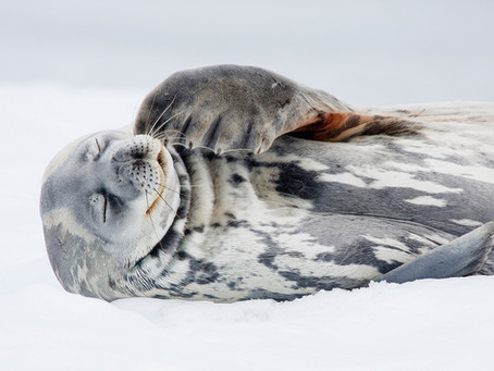 In the Footsteps of Shackleton