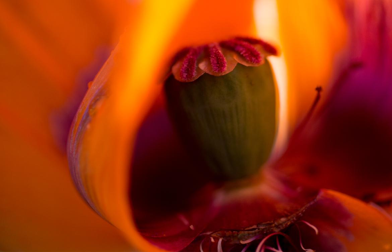 Poppy inside