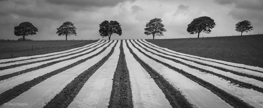 Dart's Farm trees
