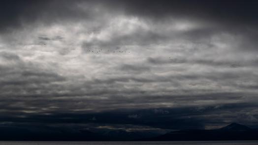A47I4450_birds_sky.jpg