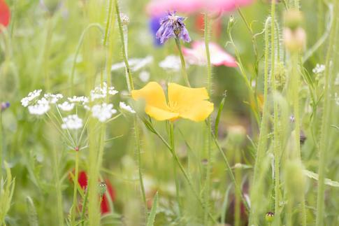 CY6A0284_wildflowers_web.jpg