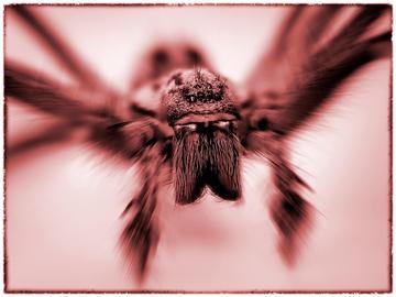 Darth Spider