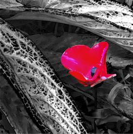 Broken poppy