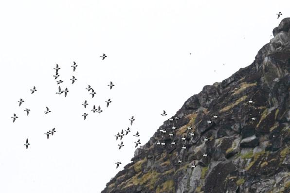 A47I5315_mountainside.jpg