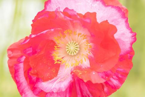 CY6A0325_wildflowers_web.jpg