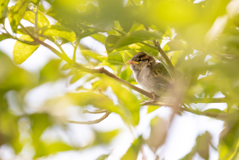 A47I8662_bird_web.jpg