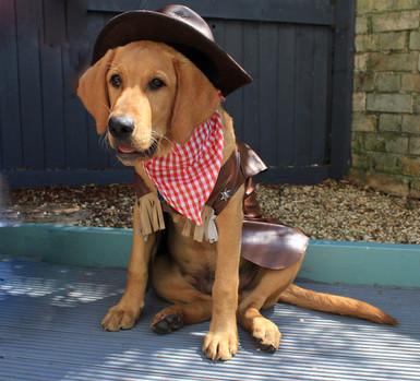 Deputy Dawg