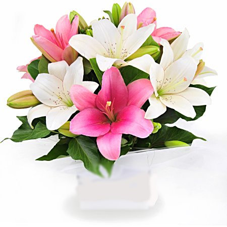 Pastel Lillies