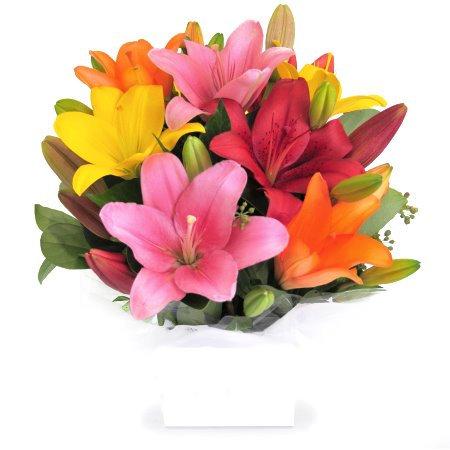 Brilliant Lillies