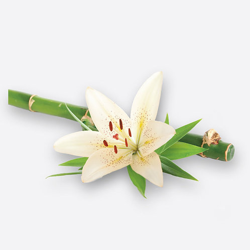 BAMBOO & WHITE LILY CANDLE AND DIFFUSER REFILLS