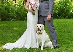 bride groom dog.jpg