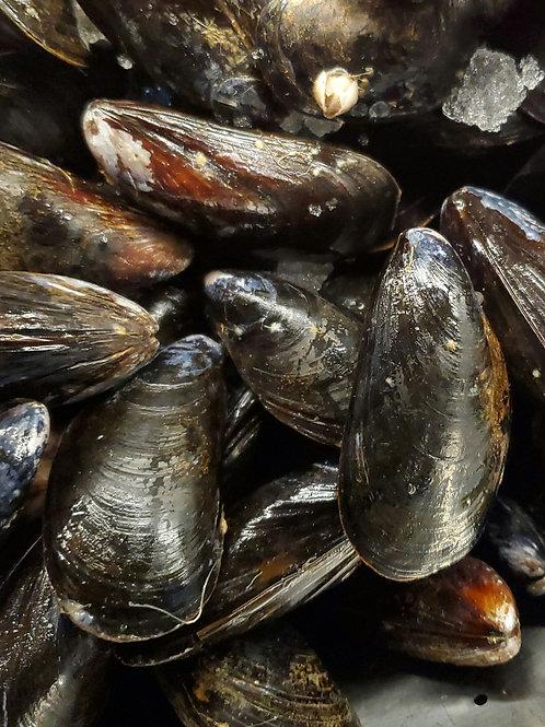 Fresh Mussels 1lb