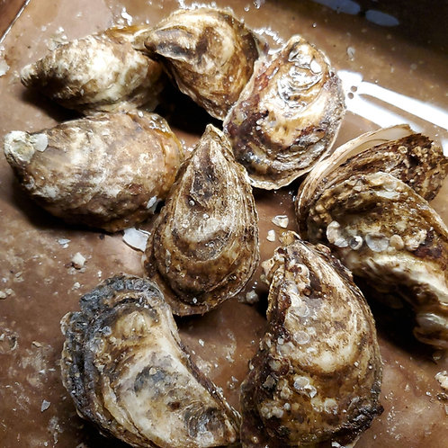 Malpeque Choice Oysters