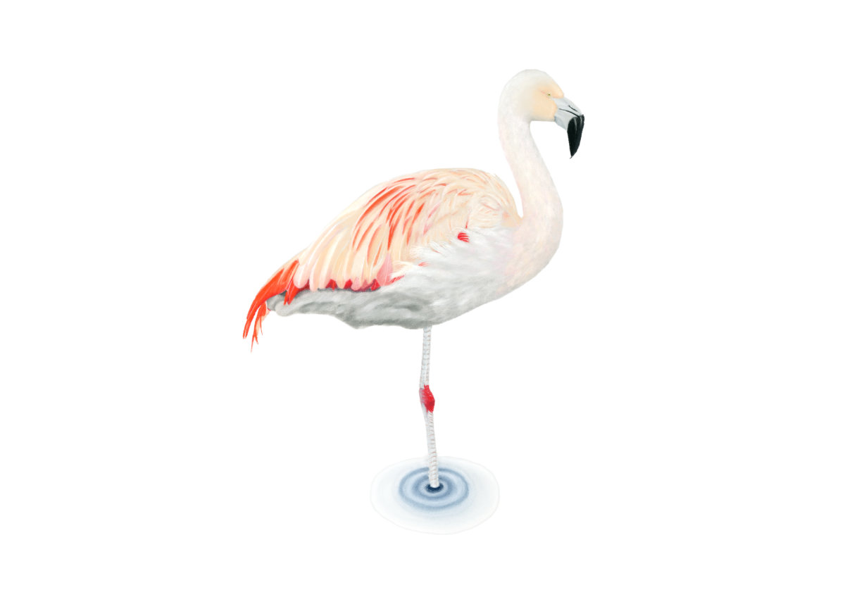 Lola Pink Flamingo