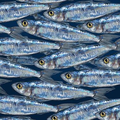 AliEllyDesign sardines for studio.jpg