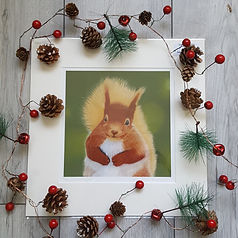 red-squirrel--giclee-print-alan-taylor-a
