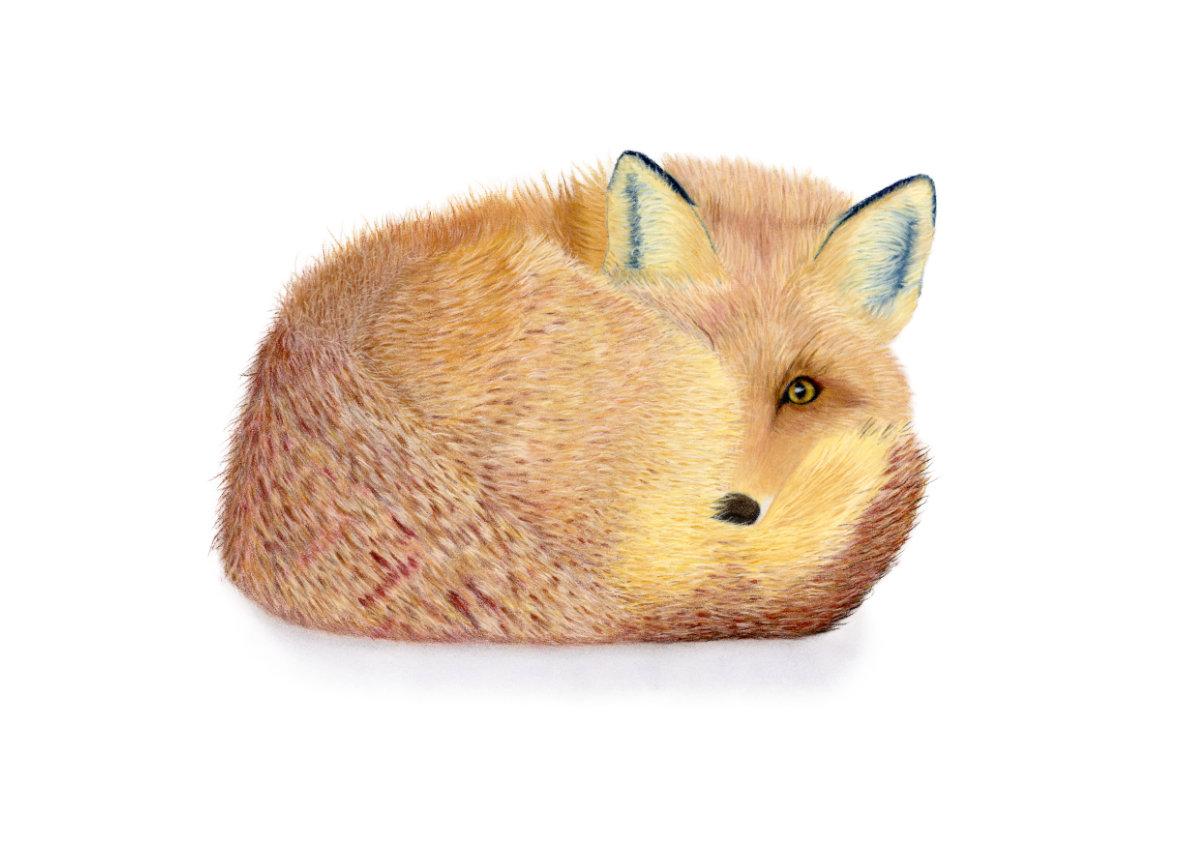 Renard the Forever Alert Fox