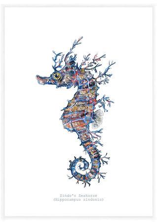 Aly Elly artist - Sindo's Seahorse.jpg