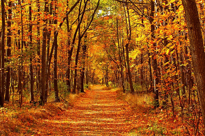 Autumn forest scenery with road of fall