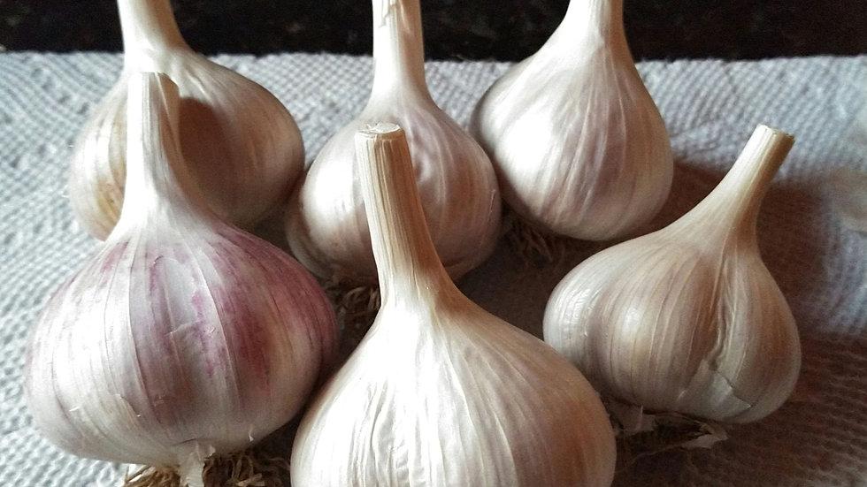 Music Garlic - 1/4 Pound